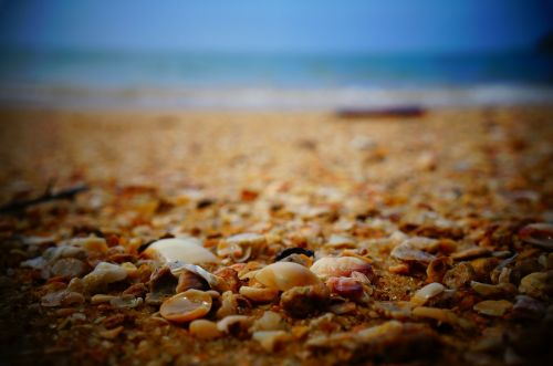 seashells shells ocean