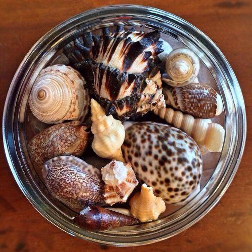 seashells ocean beach