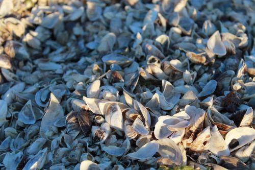 seashells blue sea