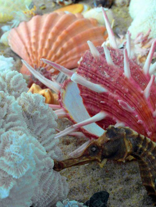 Seashells And Seahorse