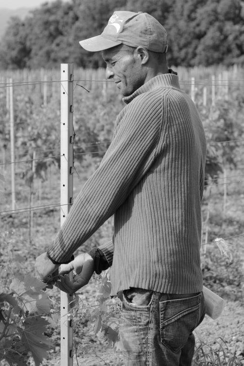 seasonal worker worker farmer