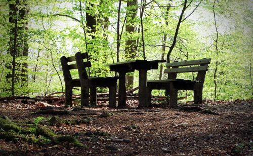 seating arrangement nature resting place