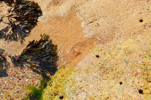 seaweed sea sea shore