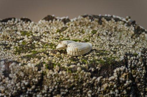 seaweed  barnacles  mussels