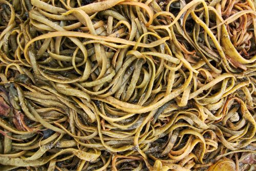 seaweed sea weed