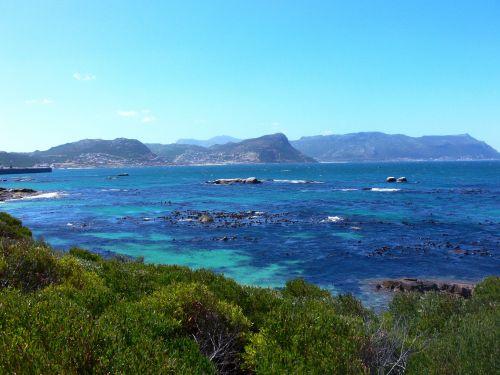 Seaweed In Tropical Bay
