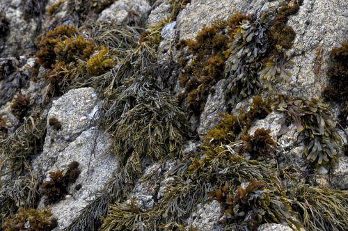 Seaweed Rock Garden