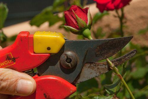 secateur gardener size