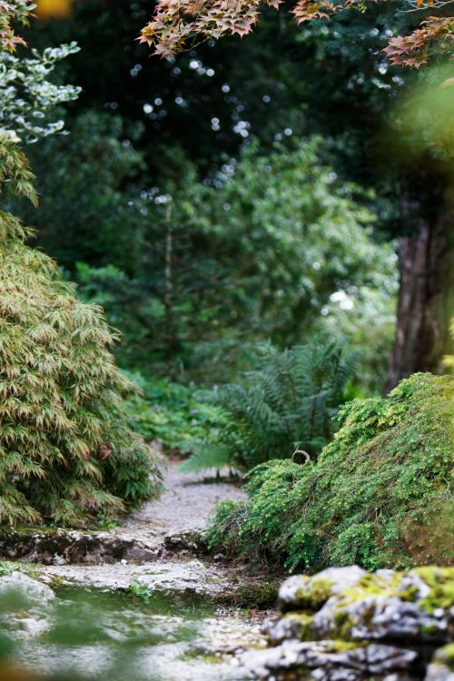 Secret Path Through Forest