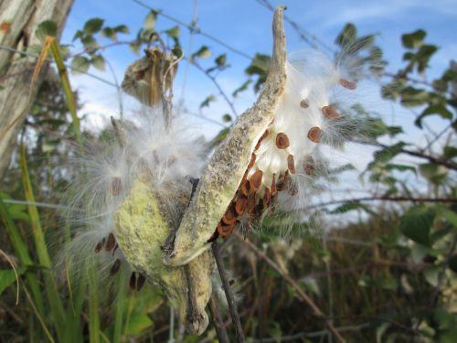 seed pod nature