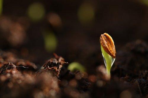 seed  germinate  spring