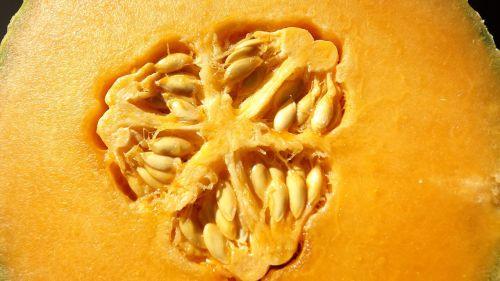 seed cantaloupe fruit