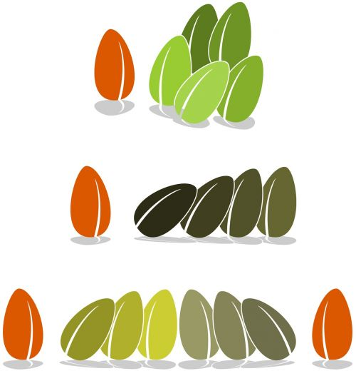 seed bean bias