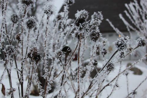 seed pods frost garden