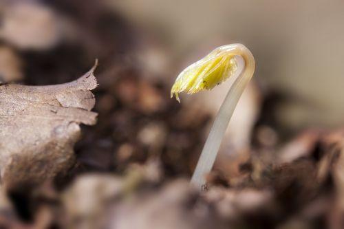 seedling germ leaves wildling