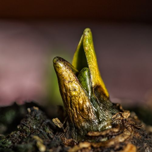 seedling plant young