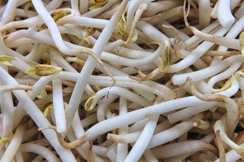 seedlings mung bean seedlings bean sprouts