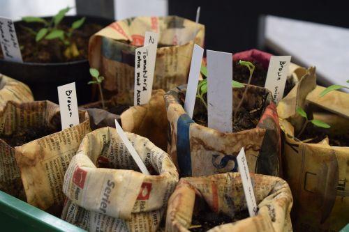 sodinukai,daržovės,augti,šviežios daržovės,vegetariškas,motina,pjaustymas,ekologiskmat,daržovių,naudinga,auginimas