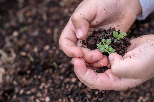 seedlings  seed  children's hands