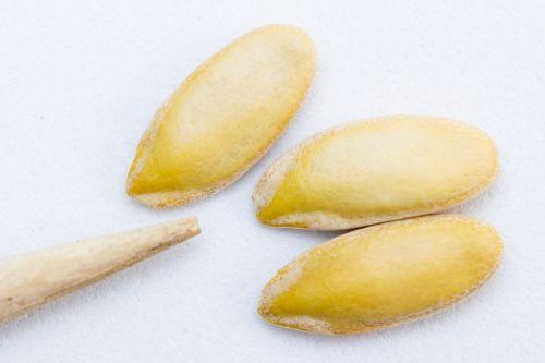 seeds melon selection