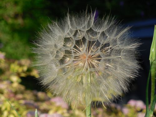 seeds seed pod pod