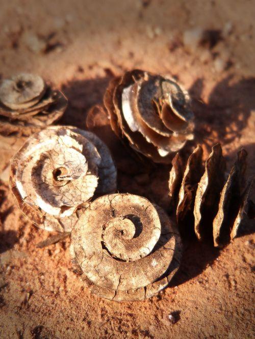 seeds spiral forms
