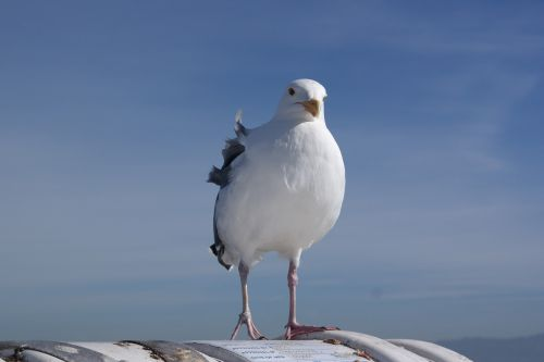 seevogel seagull waterfowl