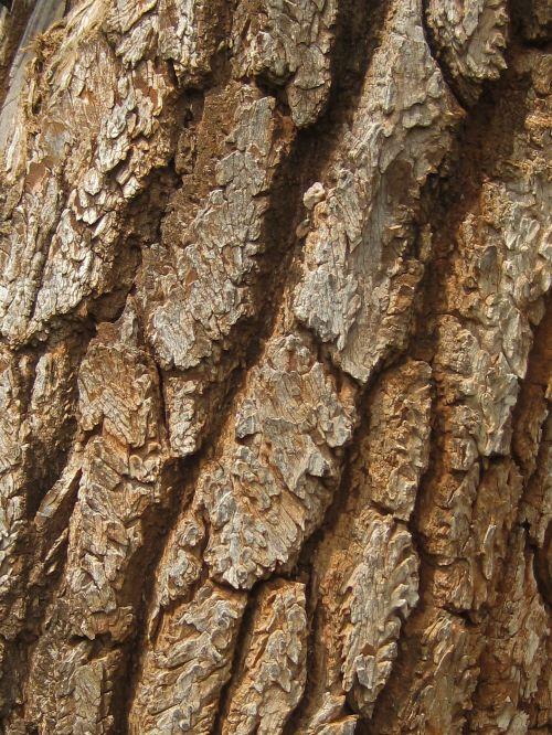 Segmented Bark On Tree Trunk