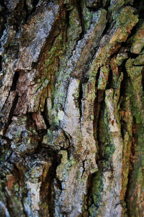Segmented Bark