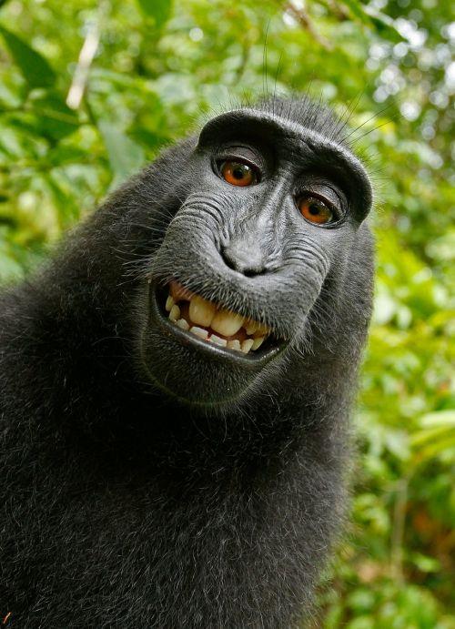 selfie monkey self portrait