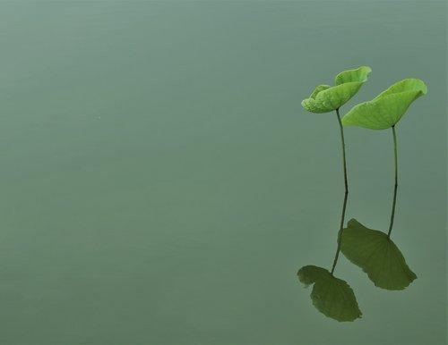 sen  leaf  lake