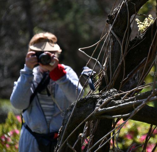 Senior Lady Photographer