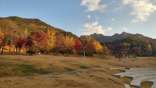 seoul  autumn  willow country