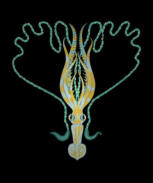 sepia squid tentacle