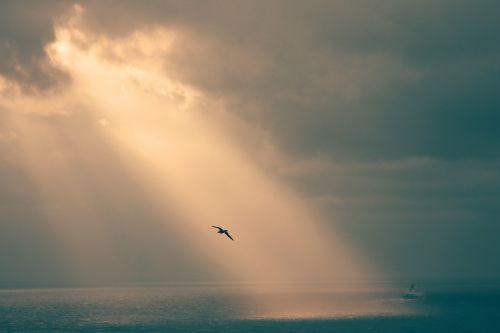 sepia seagull chill