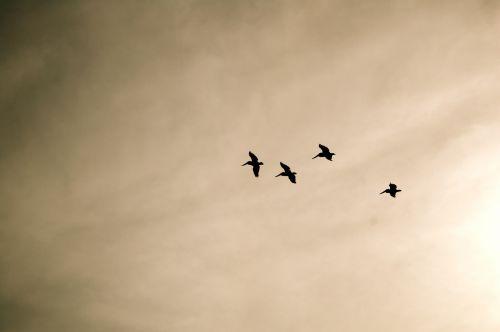 Sepia Seagulls
