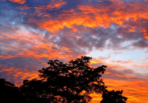 Seringa Tree And Fiery Sky