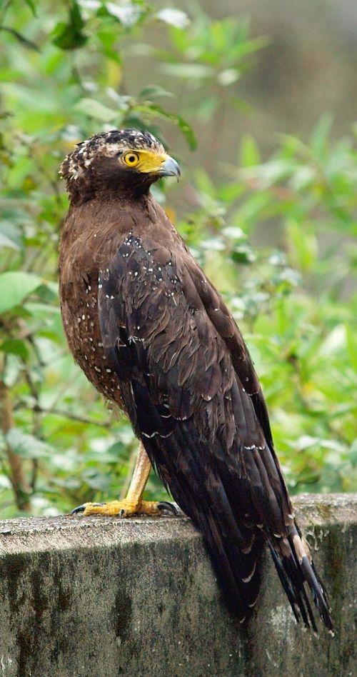 Serpent Eagle At Roadside