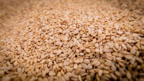 sesame seeds sesame seeds