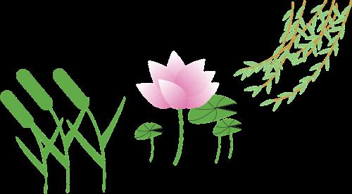 setaria viridis cartoon lotus