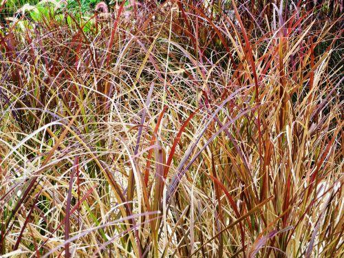seychelles hotel complex garden