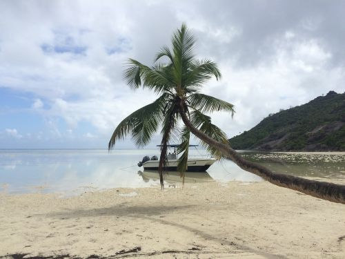 seychelles holiday palm trees