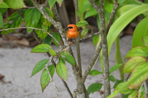 seychelles  bird  bright