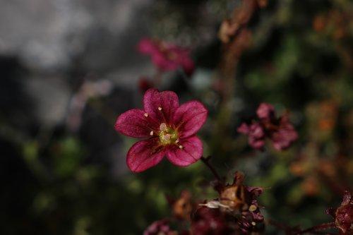 shade  summer  flower