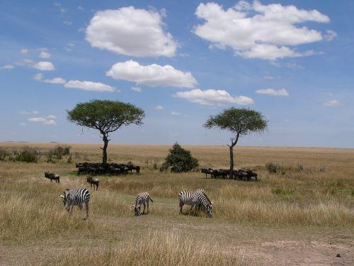 shadow zebras protection