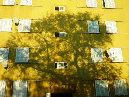 shadow tree silhouette