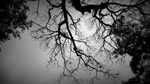 šešėlis medis,juodas ir baltas medis,neuronai,dizainas,medis,fonas,šviesa,juoda,tamsi,medžiai,dangus,kraštovaizdis,gamta,spinduliai,paslaptis,balta