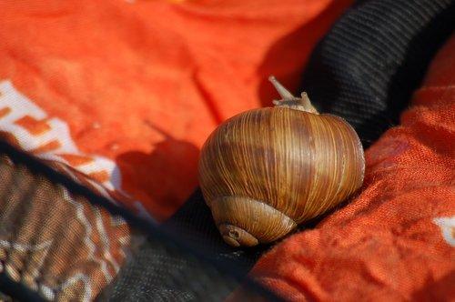 shadows  snail  horns