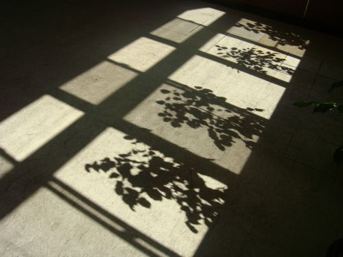 shadows shadow after the afternoon
