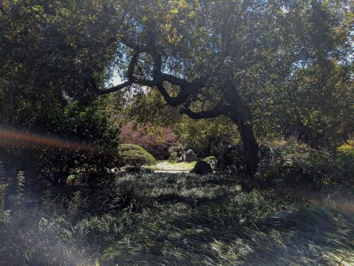 Shady Picnic Spot